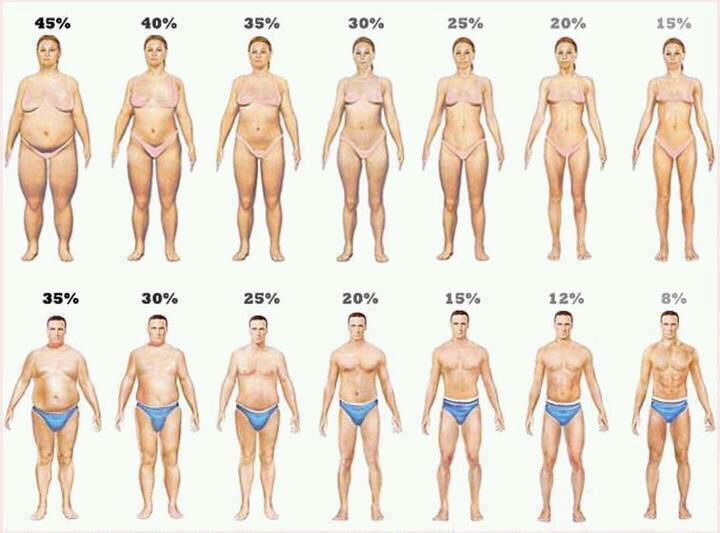 Understanding Body Fat Percentage and BMI - Live Life ...